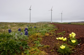 Photo of wind turbines and flowers.