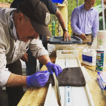 A photo of scientists tagging eels