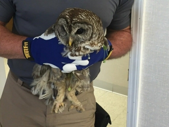 Swift & Staley Operations and Maintenance Manager Kyle Gore holds the injured barred owl.