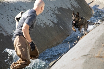 A trainer works on criminal apprehension with a canine as part of the Washington State Police Canine Association's training at the Hanford Site.