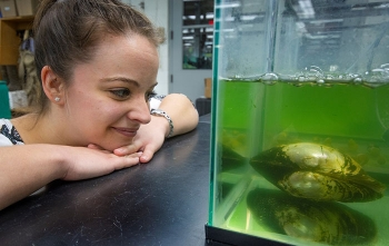 Native fresh water mussels have shown the ability to significantly improve water quality. Within hours, they can filter the water in the tank, pictured, and make it clear.