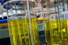 DOE Bioenergy Research Centers