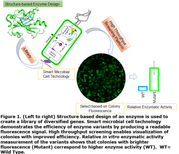 Figure 1. (Left to right) Structure based design of an enzyme is used to create a library of diversified genes. Smart microbial cell technology demonstrates the efficiency of enzyme variants by producing a readable fluorescence signal.