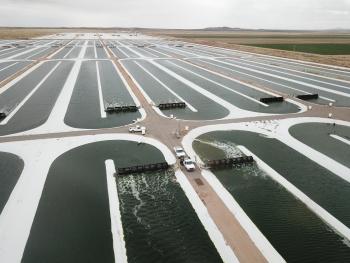 A field of algae raceway ponds.  Photo by Qualitas