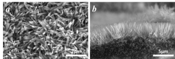 Figure 1: Scanning electron microscopy (SEM) images of ZnO nanoarray on the cordierite: (a) top view; (b) cross-section view.
