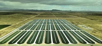 Commercial production-scale algae cultivation ponds.