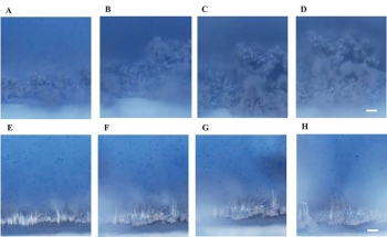 Optical images of sodium deposited from an electrolyte as electrical current of 1 mA/cm2 (seeded with blue particles for visualizing the associated flow of electrolyte).