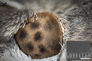 An FY19 SBIR award-winner uses the characteristics of moth eyes to improve the energy efficiency of OLEDs.