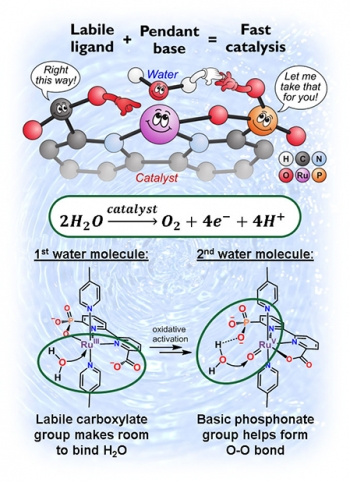 The cartoon represents the functions of the catalyst components and chemical drawings of the key reaction steps in oxidizing water (H2O) into oxygen (O2), electrons (e-), and protons (H+).