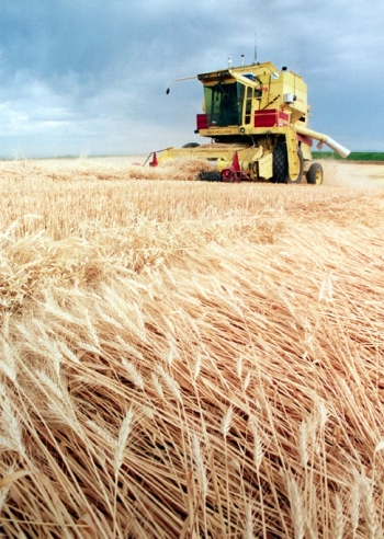 A photo of a farmer harvesting wheat