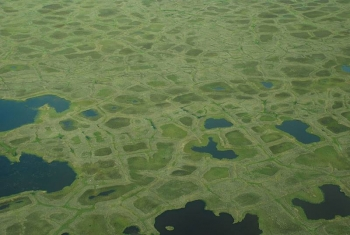 Productivity of vegetation is linked to spatial position across the tundra landscape.