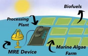 Graphic illustrating Marine Algae.