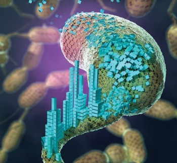 When nanomaterials are attached to the surface-layer proteins of Caulobacter crescentus, the bacterium is transformed into a platform for creating self-assembling biomaterials.