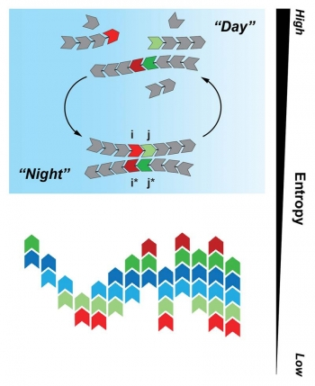 """The Tkachenko-Maslov model shows monomers cycling between """"day"""" and """"night"""" (top). Ultimately, the cycling process results in a complex system made from a small number of polymer fragments, with decreased information entropy (bottom)."""