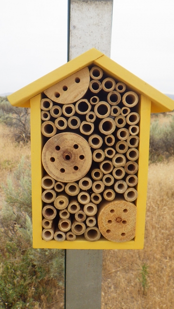 Workers with Mission Support Alliance recently installed 20 bee boxes as part of habitat mitigation efforts at the Hanford Site.