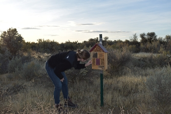 Mission Support Alliance Environmental Scientist Emily Norris checks on the progress of bee nesting in bee boxes recently installed at the Hanford Site.