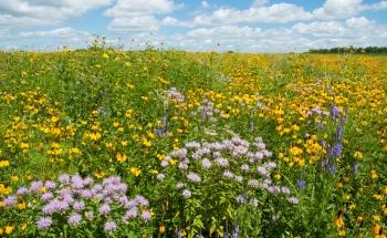 Weldon Spring Prairie of Flowers