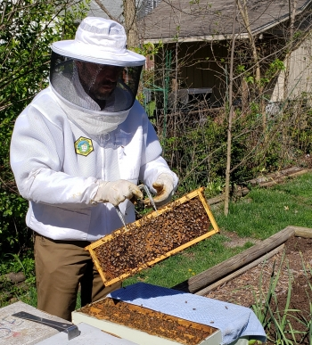 Randy Weidman inspects one of his beehives.