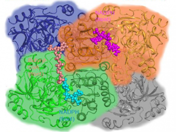 Biomolecular imaging reveals the structure of a type of enzyme called Enoyl-CoA carboxylases/reductases. These enzymes, which are involved with photosynthesis, are extremely effective at fixing carbon dioxide and removing it from the atmosphere.