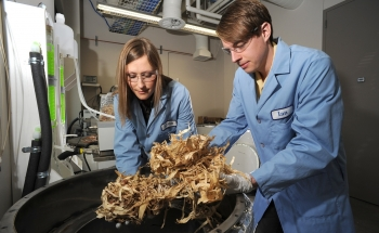 Photo of two scientists processing corn stover.