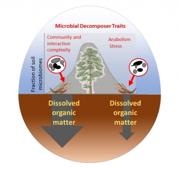 Several microbial community traits influence the fate of carbon in soil.