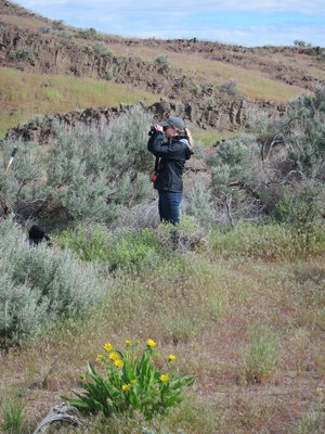 Emily Norris, an environmental scientist with EM Richland Operations Office contractor Mission Support Alliance's ecological monitoring and compliance program, surveys wildlife in some of Hanford's mature sagebrush habitat that make up the site's distinct