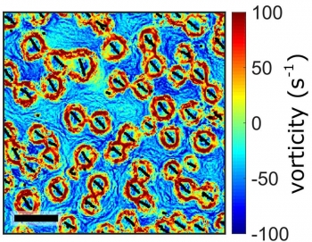 Fluid vortices induced by a swarm of synchronized spinning particles in a liquid-like state. The activity of spinning self-assembled particles produces flows that cause neighboring spinning particles to self-organize into lattice-like structures.