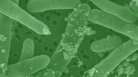 Systems biology studies how different living organisms at many scales interact.