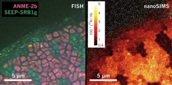 At left, microscopy image of a sediment sample containing methanotrophic archaea (pink) and sulfate-reducing bacteria (green). At right, mass spectrometry image showing levels of nitrogen incorporation by the different types of microorganism.
