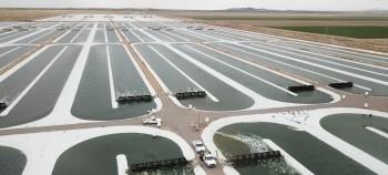 A field of algae raceway ponds.