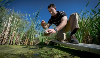 A researcher kneels on a board above a pond and collects an algae sample.