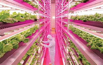 Photo of a worker in a greenhouse with LED lighting.