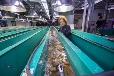 researcher at ORNL aquatic ecology lab
