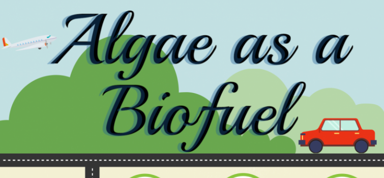 BioenergizeME Infographic Challenge: Algae as a Biofuel