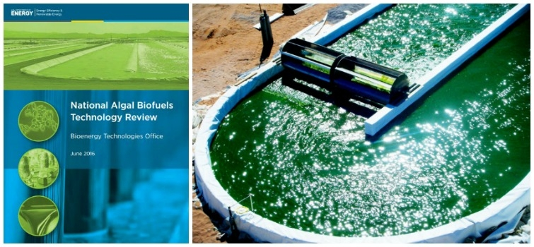 Release of the 2016 National Algal Biofuels Technology Review Charts Path Forward for Algae