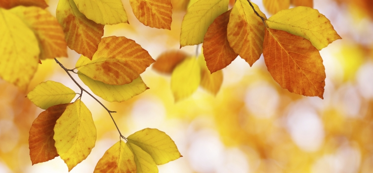 Fall and Winter Energy-Saving Tips