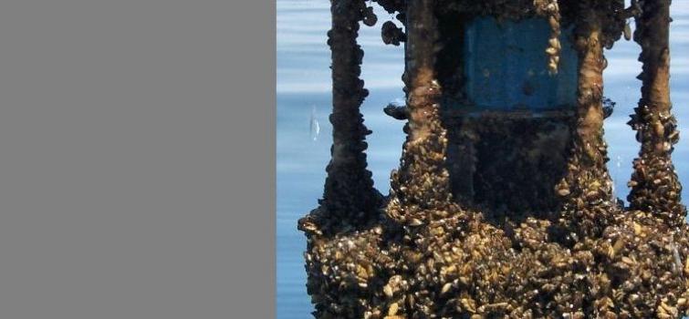 October 2, 2008: NETL and Zebra mussels