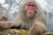 To introduce this new electric heat pump water heater, GE ran a memorable ad during the 2010 Winter Olympics featuring snow monkeys enjoying a hot soak. Credit: GE