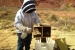 A beekeeper starts a new hive at the Moab site with 3 pounds of bees and a queen. Sugar water is sprayed on the bees before placing them into the hive to keep them calm and prevent them from flying away.