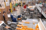 Four Seasons Produce employees processing oranges at their 50001 Ready facility in Ephrata, PA.