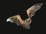 research funded bat deterrent technologies to minimize the need for curtailment to reduce environmental impacts of land-based and offshore wind energy