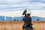 Falcon on a man with wind turbines in the background.