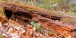 Bacteria help drive the natural decay of plant material using small sulfur compounds called thiols.