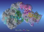 Researchers used the new model to accurately identify clusters of gene mutations (spheres), which helped them study the emergence of various genetic diseases.