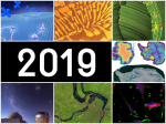 DOE's Office of Science shared more than 1500 stories about our research in 2019.