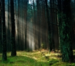 a photo of a forest with sun peaking through the leaves