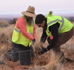 Transplanting vegetation from Canyonlands National Park to the Moab Site
