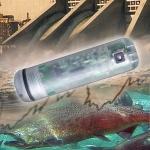 graphic of a fish sensor.