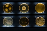 Images of different bacteria.