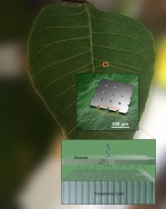 Researchers fabricated synthetic, moisture-controlling leaves that resist drying in low humidity.